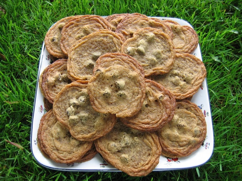 plate of chocolate chip cookies in a a field of green grass
